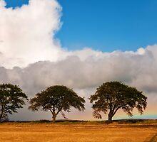 Rainbow Day by JennyRainbow