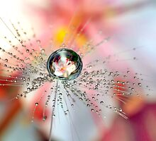 Dandelion Flower Drop by Gazart