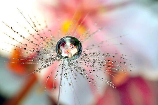 Dandelion Flower Drop by Gazart