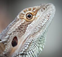 Portrait of a Dragon by Jennie Gardiner