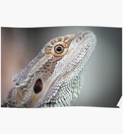 Portrait of a Dragon Poster