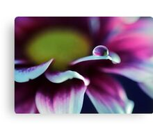 Mother's Day Daisy Canvas Print