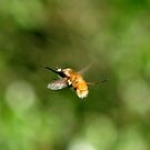 BEE-FLY by Russell Couch