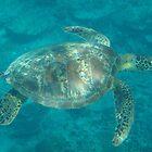 Samoa Turtle by taryn88