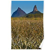 Mt Beewah and Mt Coonowrin behind pineapple feilds Poster