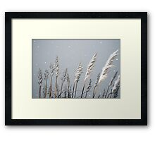 snowy covered reeds Framed Print