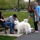 Beautiful Day For A Walk At the Park, both Canines and Owners by Jane Neill-Hancock