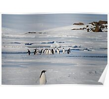 Browning Peninsula Adventure Penguins - Antarctica Poster