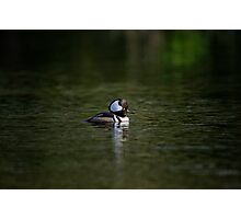 A Lone Hooded Merganser Photographic Print