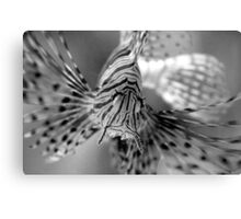 stretching those underwater wings Canvas Print