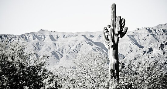 Saguaro by Randy Turnbow