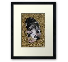 Little Piggy Framed Print