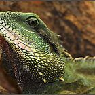 Asian Water Dragon by alan tunnicliffe