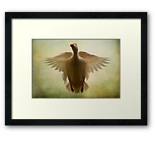Duck Flight Framed Print
