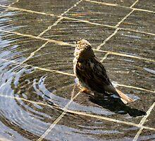A Sparrow Amid Ripples by silentsunlight