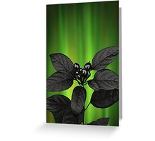 Black Berries and Northern Lights Greeting Card
