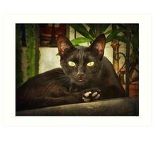 Black cat, green eyes. Art Print
