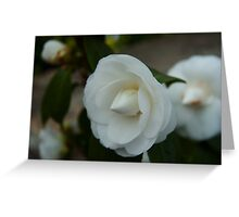 White flower 2 Greeting Card