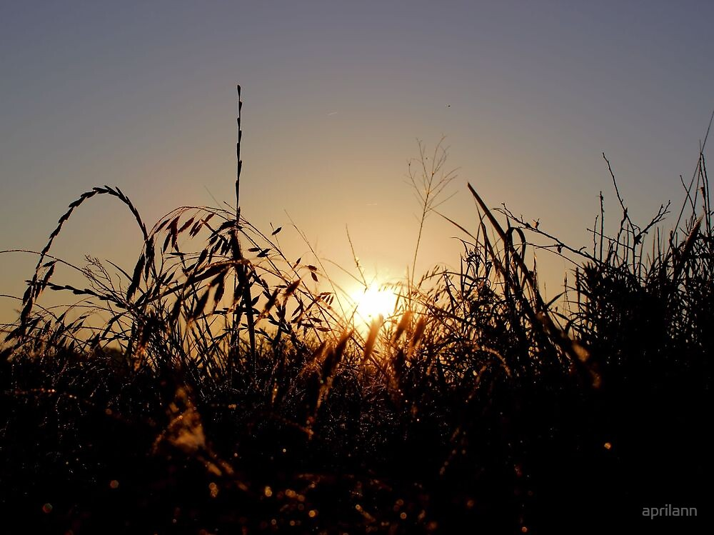 Sunrise over Pecan Grove Park by aprilann