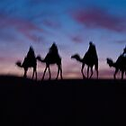 Camels in the Sahara  by Melissa Pinard