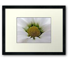 White Daisy Flower Framed Print
