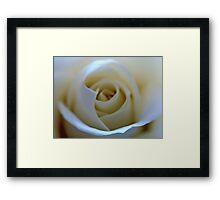 White Rose Flower Framed Print