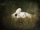 Nesting by Carol Bleasdale