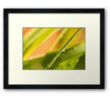 Colourful Raindrops Framed Print