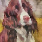 English Springer Spaniel by doggylips
