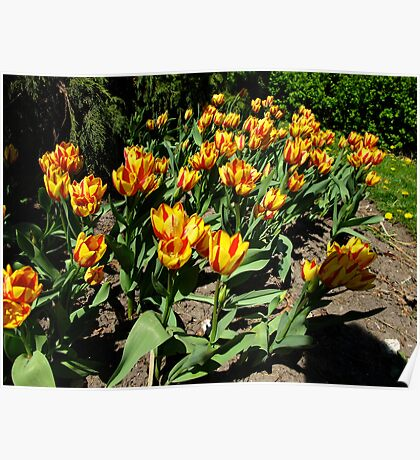 Rip roaring Spring Poster