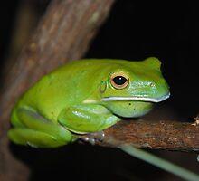 Green frog by mechelle142