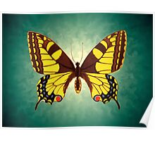Papilio machaon Butterfly  Poster