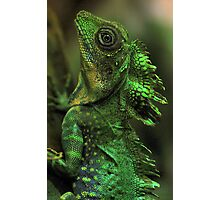Emerald Scales Photographic Print