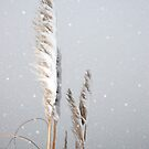 snowy covered rushes and reeds by morrbyte