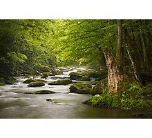 Smoky Mountains Solitude - Great Smoky Mountains National Park Photographic Print