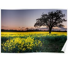 Glowing fields at Dusk Poster