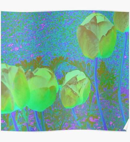 Cross Dressing Tulips Poster