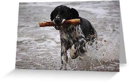 Spaniel in the waves by JenHodgson