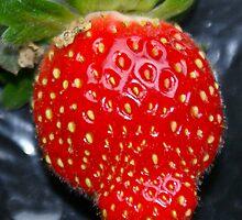 Strawberry by pcfyi