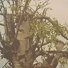 Gnarled Tree by adrienne75