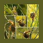 Snail acrobatics in the rapeseed - Storyboard by steppeland