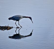 My Blue Reflection by Diego Re
