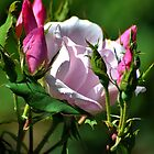 Pretty In Pink by Kathy Baccari
