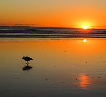sunrise at the Mount by Anne Scantlebury