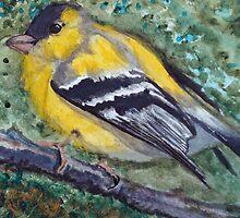 Finch Study 1 by JRobinWhitley