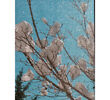 Snow Blooms Behind a Screen Photographic Print