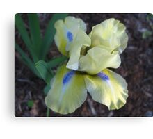 Playful Iris Canvas Print