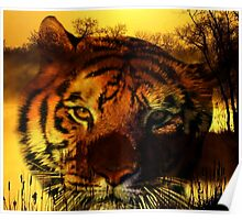 Tiger and Sunset Poster
