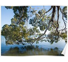 foliage reflected Poster