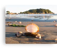 scattered shells Canvas Print